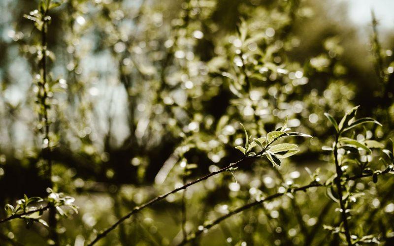 Frühlingsheimat